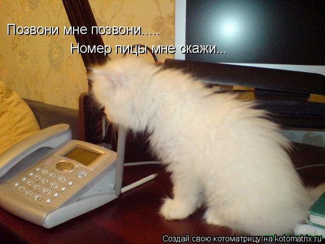 Котоматрица: Позвони мне позвони..... Номер пицы мне скажи...