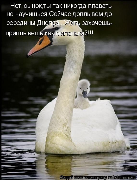 Котоматрица: Нет, сынок,ты так никогда плавать не научишься!Сейчас доплывем до середины Днепра...Жить захочешь- приплывешь как миленький!!!