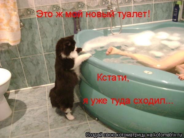 Котоматрица: Это ж мой новый туалет! Кстати, я уже туда сходил...