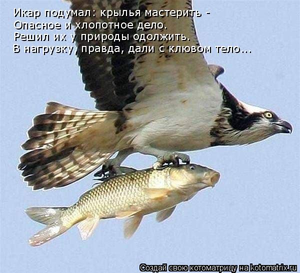 Котоматрица: Икар подумал: крылья мастерить - Опасное и хлопотное дело. Решил их у природы одолжить. В нагрузку, правда, дали с клювом тело...