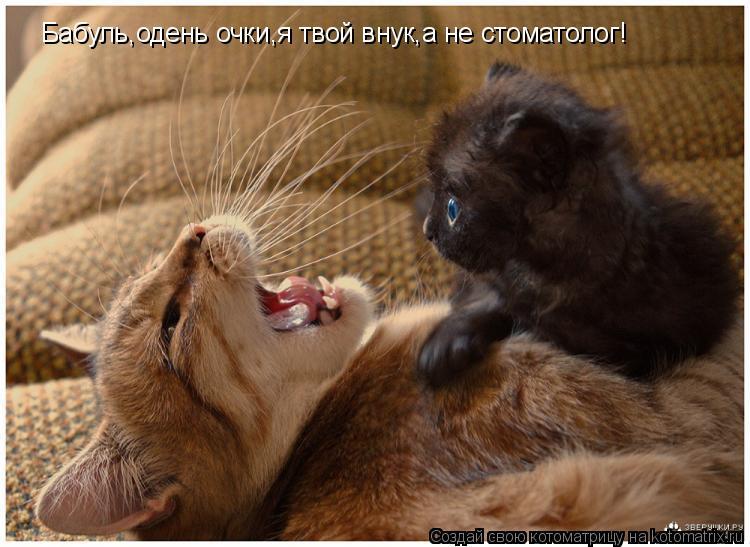 Котоматрица: Бабуль,одень очки,я твой внук,а не стоматолог!