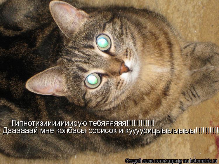 Котоматрица: Гипнотизииииииирую тебяяяяяя!!!!!!!!!!!! Даааааай мне колбасы сосисок и куууурицыыыыыыы!!!!!!!!!!!!