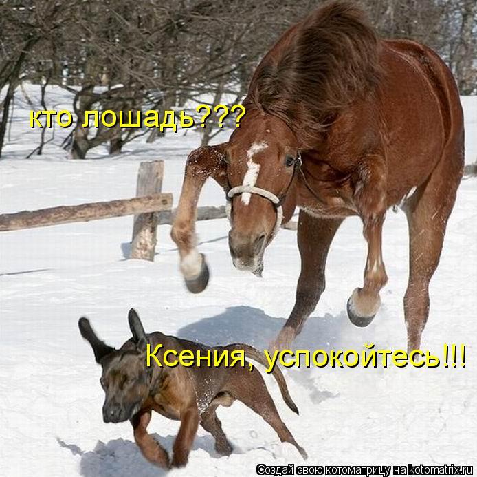 Котоматрица: кто лошадь??? Ксения, успокойтесь!!!