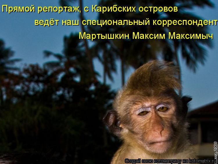 Котоматрица: Прямой репортаж, с Карибских островов ведёт наш специональный корреспондент Мартышкин Максим Максимыч