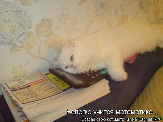 Котоматрица: Нелегко учится математике...