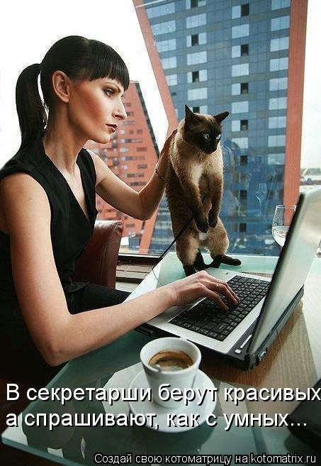 Котоматрица: В секретарши берут красивых, а спрашивают, как с умных...