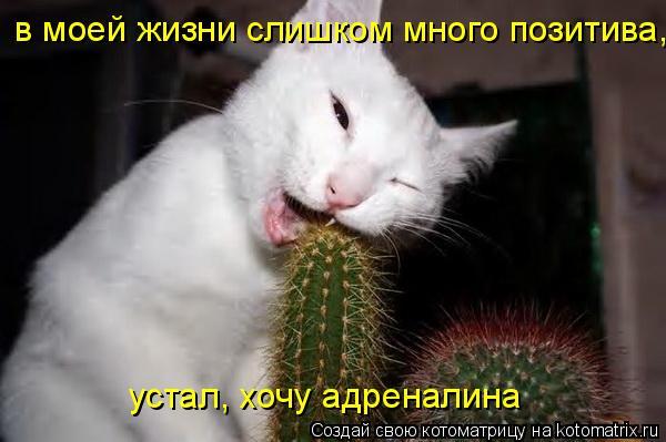 Котоматрица: в моей жизни слишком много позитива, устал, хочу адреналина