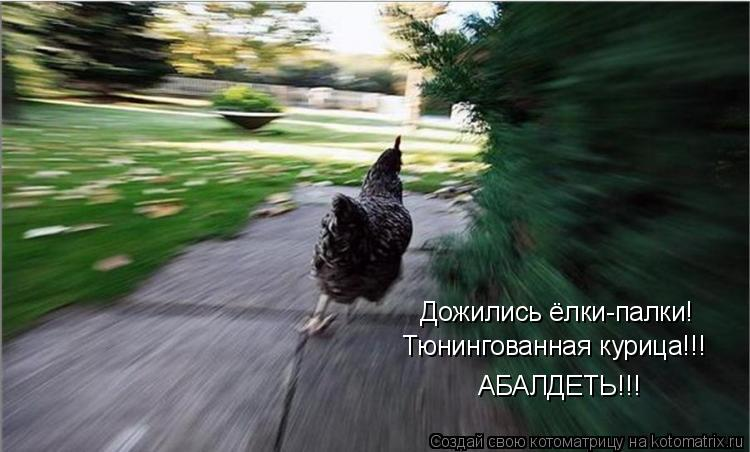 Котоматрица: Дожились ёлки-палки! Тюнингованная курица!!! АБАЛДЕТЬ!!!