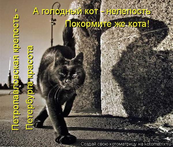 Котоматрица: Петропавловская крепость -  А голодный кот - нелепость Покормите же кота! Петербурга красота