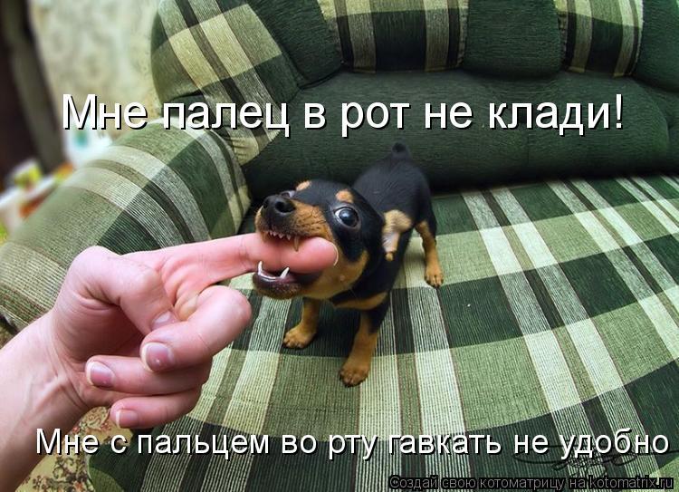 Котоматрица: Мне палец в рот не клади! Мне с пальцем во рту гавкать не удобно