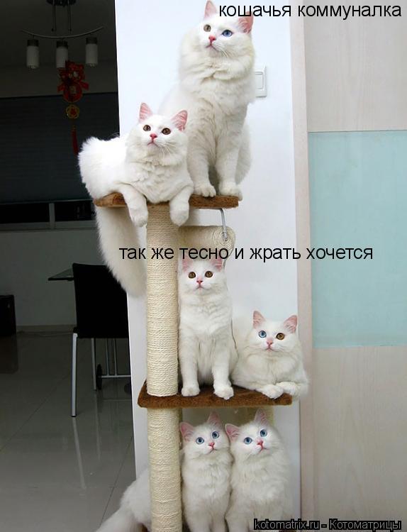 Котоматрица: кошачья коммуналка так же тесно и жрать хочется