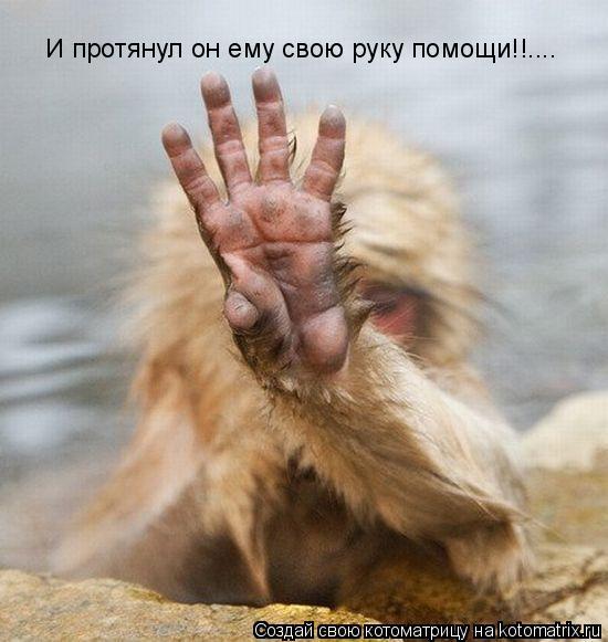 Котоматрица: И протянул он ему свою руку помощи!!....
