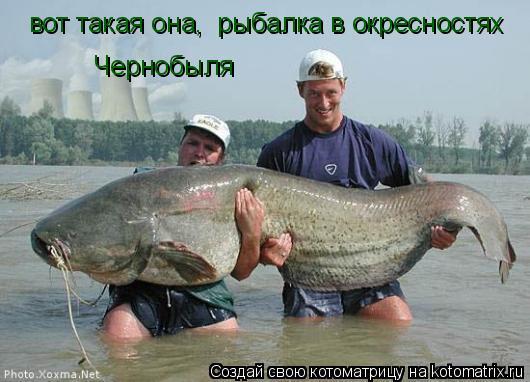 Котоматрица: вот такая она,  рыбалка в окресностях Чернобыля
