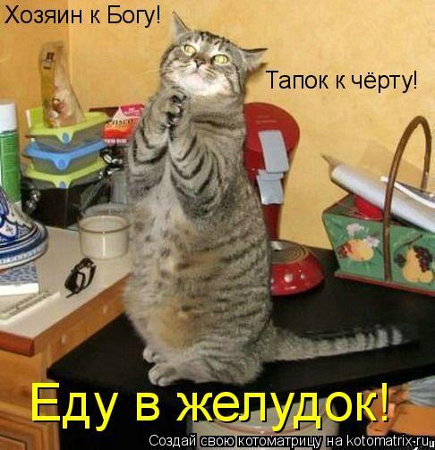 Котоматрица: Хозяин к Богу! Тапок к чёрту! Еду в желудок!