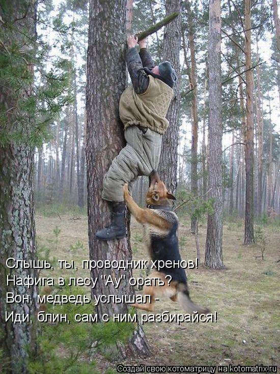 """Котоматрица: Слышь, ты, проводник хренов! Нафига в лесу """"Ау"""" орать? Вон, медведь услышал -  Иди, блин, сам с ним разбирайся!"""