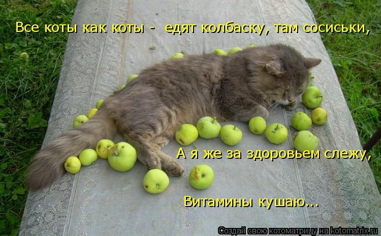 Котоматрица: Все коты как коты -  едят колбаску, там сосиськи, А я же за здоровьем слежу, Витамины кушаю...