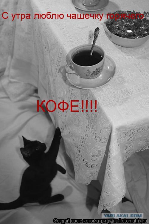 Котоматрица: С утра люблю чашечку горячего  КОФЕ!!!!