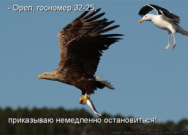 Котоматрица: - Орел, госномер 32-25,  приказываю немедленно остановиться!