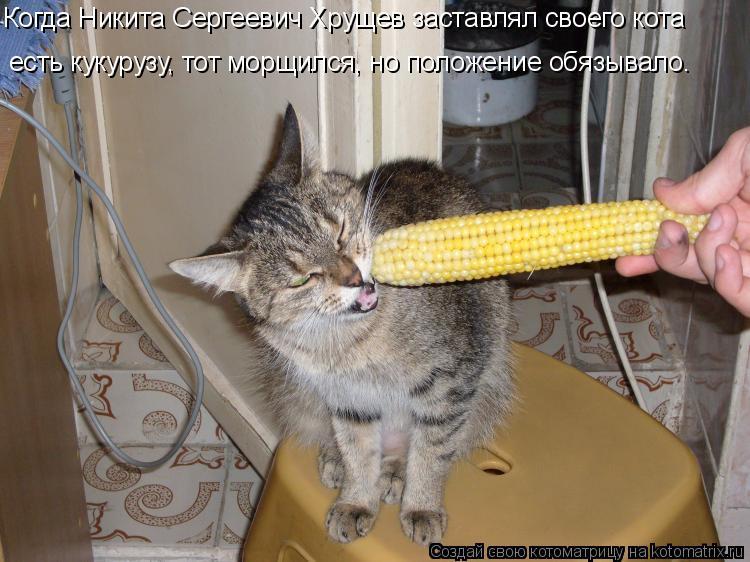 Котоматрица: Когда Никита Сергеевич Хрущев заставлял своего кота есть кукурузу, тот морщился, но положение обязывало.