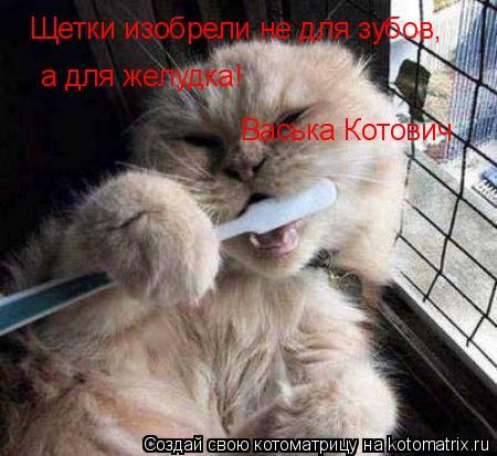 Котоматрица: Щетки изобрели не для зубов, а для желудка! Васька Котович