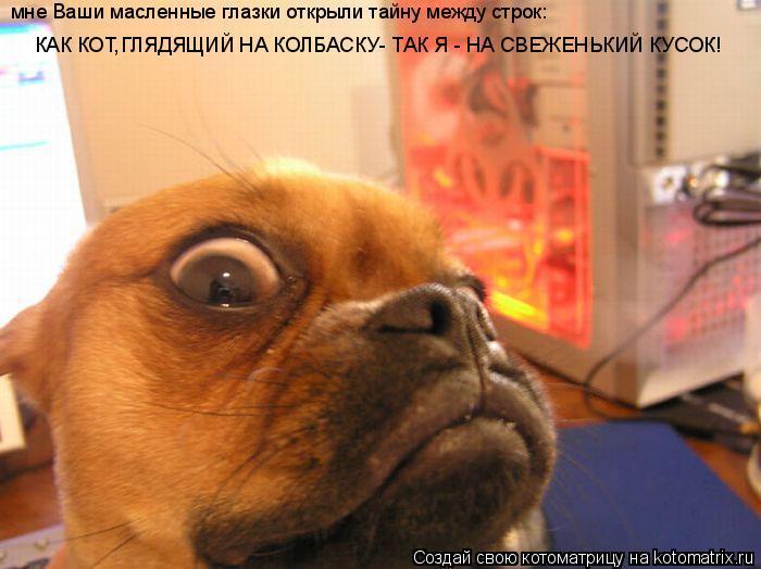 Котоматрица: мне Ваши масленные глазки открыли тайну между строк:  КАК КОТ,ГЛЯДЯЩИЙ НА КОЛБАСКУ- ТАК Я - НА СВЕЖЕНЬКИЙ КУСОК!