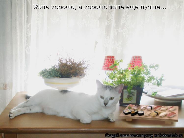 Котоматрица: Жить хорошо, а хорошо жить еще лучше...