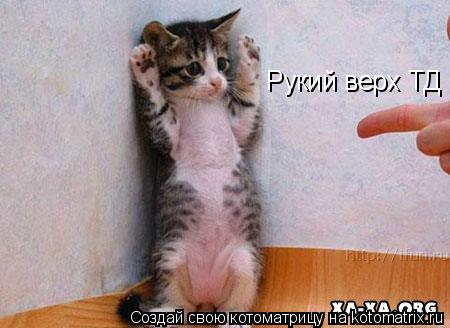 Котоматрица: Рукий верх ТД