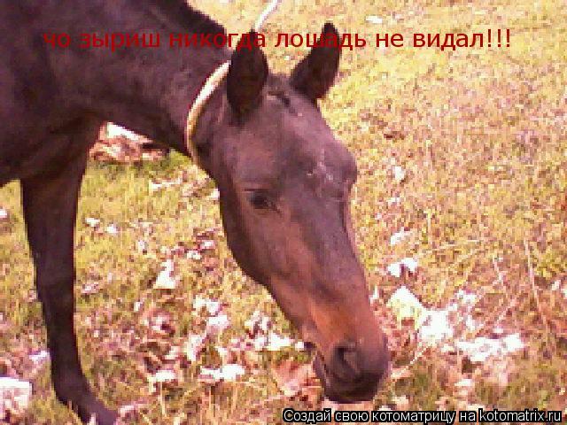 Котоматрица: чо зыриш никогда лошадь не видал!!!