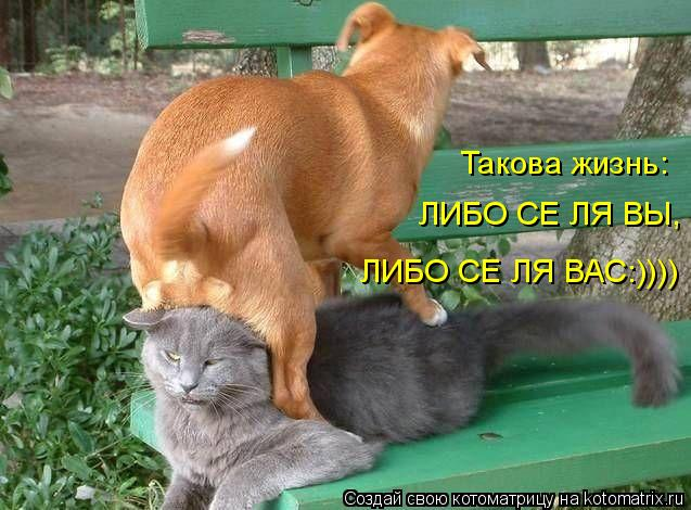 Котоматрица: Такова жизнь:  ЛИБО СЕ ЛЯ ВЫ, ЛИБО СЕ ЛЯ ВАС:))))