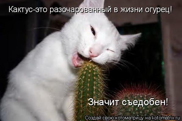 Котоматрица: Кактус-это разочарованный в жизни огурец!  Значит съедобен!