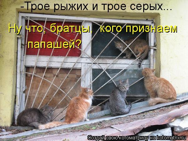 Котоматрица: Ну что, братцы,  кого признаем папашей? -Трое рыжих и трое серых...
