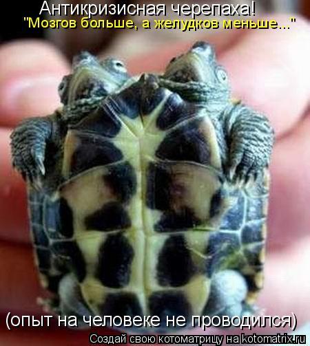 """Котоматрица: Антикризисная черепаха! (опыт на человеке не проводился) """"Мозгов больше, а желудков меньше..."""""""