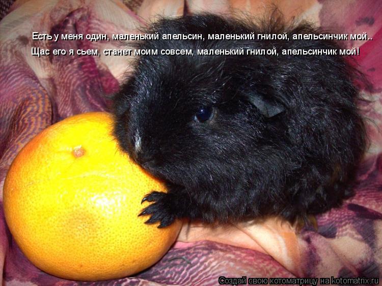 Котоматрица: Есть у меня один, маленький апельсин, маленький гнилой, апельсинчик мой.. Щас его я сьем, станет моим совсем, маленький гнилой, апельсинчик м