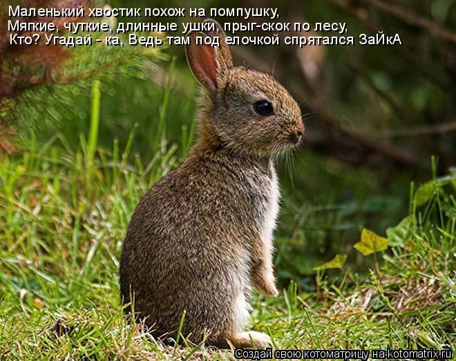 Котоматрица: Маленький хвостик похож на помпушку, Мягкие, чуткие, длинные ушки, прыг-скок по лесу, Кто? Угадай - ка, Ведь там под елочкой спрятался ЗаЙкА