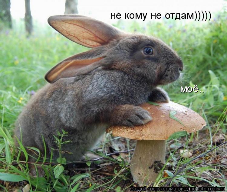 Котоматрица: моё.. не кому не отдам)))))