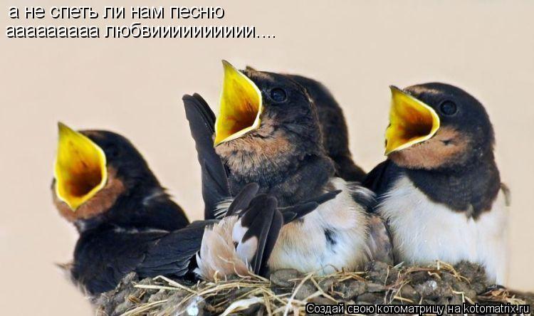 Котоматрица: а не спеть ли нам песню ааааааааа любвииииииииии....