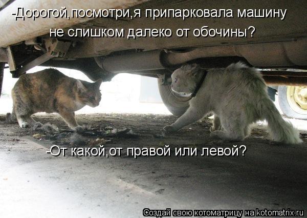 Котоматрица: -Дорогой,посмотри,я припарковала машину не слишком далеко от обочины? -От какой,от правой или левой?