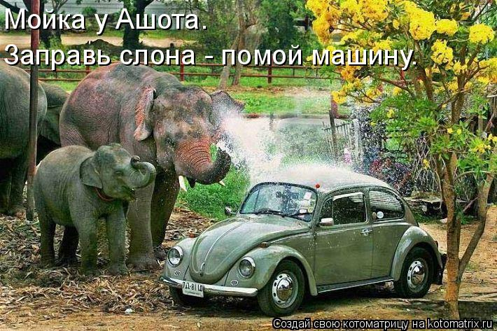 Котоматрица: Мойка у Ашота. Заправь слона - помой машину.