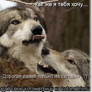 Котоматрица: -как же я тебя хочу.... -Дорогая,давай только не сегодня...?!