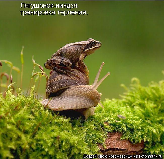 Котоматрица: Лягушонок-ниндзя. тренировка терпения.