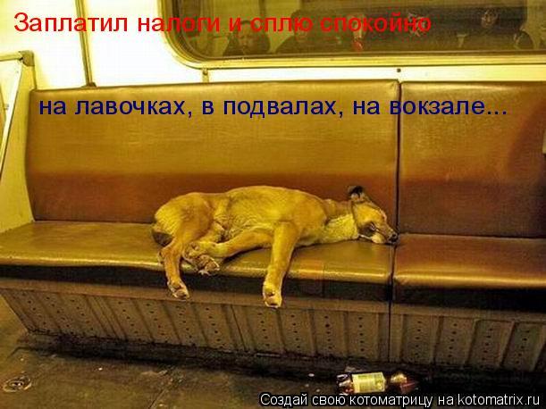 Котоматрица: Заплатил налоги и сплю спокойно   на лавочках, в подвалах, на вокзале...