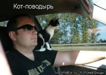 Котоматрица: Кот-поводырь Кот-поводырь