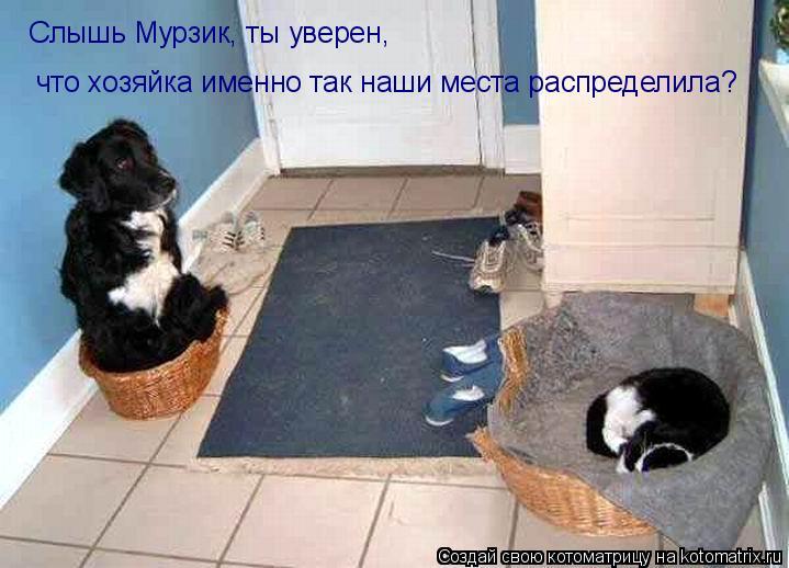 Котоматрица: Слышь Мурзик, ты уверен,  что хозяйка именно так наши места распределила?