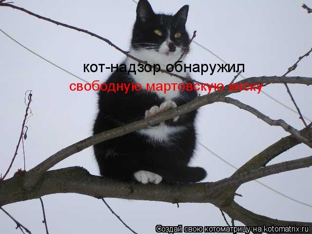 Котоматрица: кот-надзор обнаружил свободную мартовскую киску