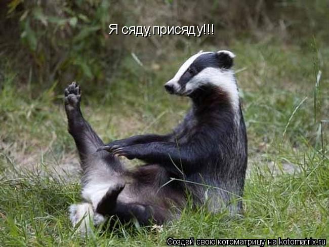 Котоматрица: Я сяду,присяду!!!