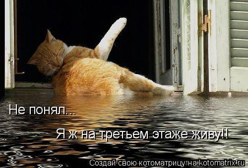 Котоматрица - Не понял... Я ж на третьем этаже живу!!