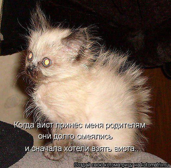 Котоматрица: Когда аист принёс меня родителям они долго смеялись  и сначала хотели взять аиста...