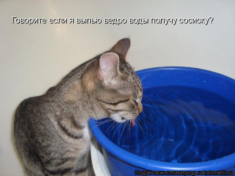 Котоматрица: Говорите если я выпью ведро воды получу сосиску?