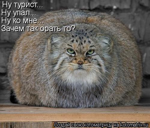 http://kotomatrix.ru/images/lolz/2009/06/15/bI.jpg