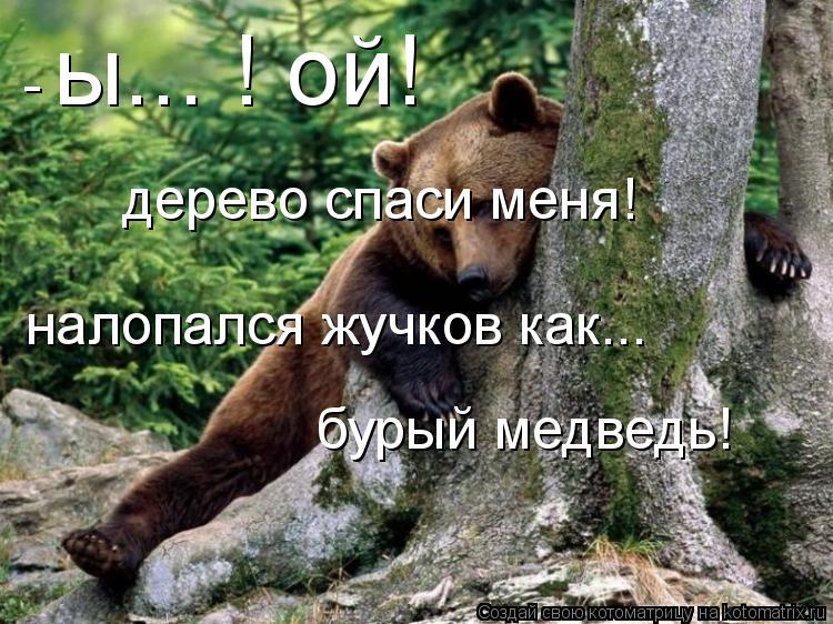 Котоматрица: ы... ! ой! налопался жучков как... бурый медведь! дерево спаси меня! -